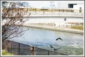 2015日本京阪自由行:2015京阪自由行D50062