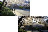 2014北陸櫻花紀行篇:2014北陸櫻花紀行篇D5060