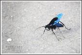 昆蟲:_MG_8679.JPG