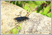 昆蟲:_MG_8698.JPG