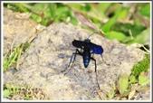 昆蟲:_MG_8693.JPG