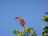 (yahoo)竹圍。紅樹林。淡水:竹圍至淡水散步10