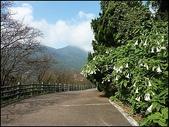 (yahoo)陽明山公園。小油坑。擎天崗。冷水坑:P1460037.JPG