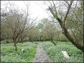 (yahoo)陽明山公園。小油坑。擎天崗。冷水坑:P1450973.JPG