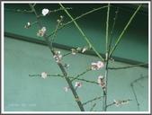 (yahoo)台中(大坑。東豐綠廊。台中公園。高美濕地):P1890296.JPG