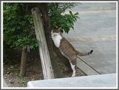 (yahoo)碧潭。和美山步道:貓咪~碧潭